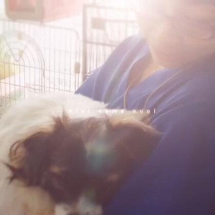 自从学会了这个视频制作,我就一发不可收拾啦,这是去年车轮下救的小王爷!!和它做宠物护士的新妈妈😘😘😘很快它就要跟新妈妈去日本定居了哦!也祝福它!