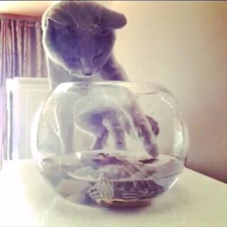 喵麻不在家的时候三个孩子会干些什么事儿呢?(喵麻编辑的搞笑故事送给大家)😘#宅在家##宠物##家有猫狗猴系列剧#