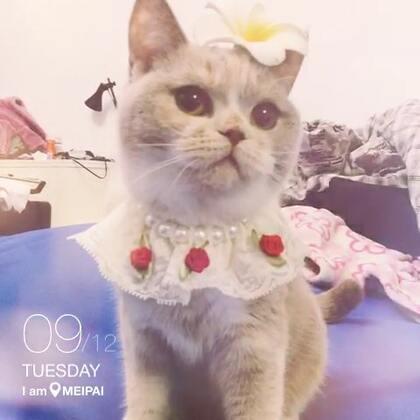 这个领花非常适合女王大人曼妙的身姿啊~