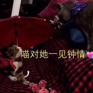 #家有猫狗猴系列剧#一见钟情💘 背景🎵《屌丝情歌》#宠物##早上好# 【故事由喵麻改编】喜欢给赞支持👏喜欢照片的微博自取!😋