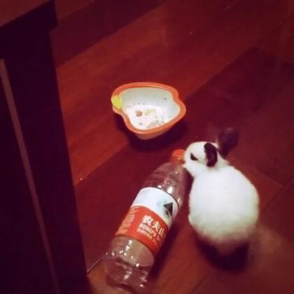#宠物#兔兔转呀转