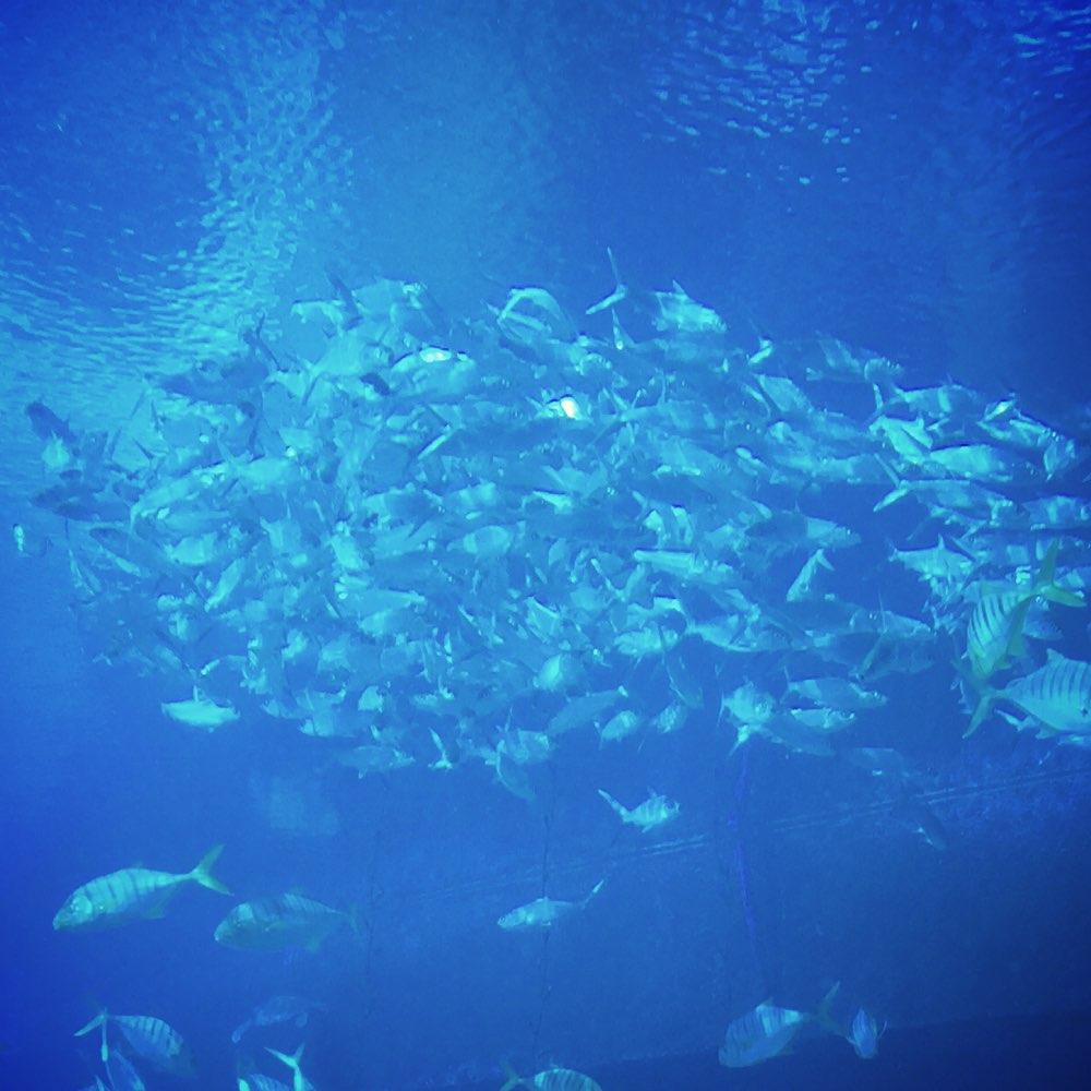 海棠湾海底世界餐厅