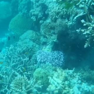 第一次体验深潜所见#澳大利亚大堡礁##潜水#🌊🐚💋💗🐠🐟🐬🐳🐋🐙💘😋😍💖🎍🌵🌞🌿