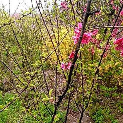 #清明节#春色溢
