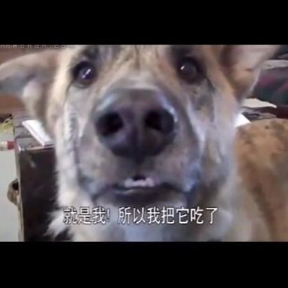 #宠物配音大赛##搞笑#宠物应该这么玩😂😂,视频非原创,只是觉得特搞笑所以分享给大家娱乐..#我要上热门#@美拍小助手