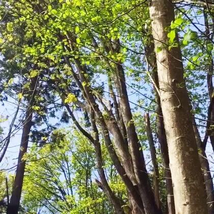 喜欢啄木鸟啄木的声音