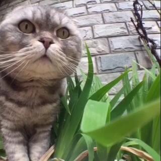 闹哥在自家院里晒☀#宠物##小小美好#