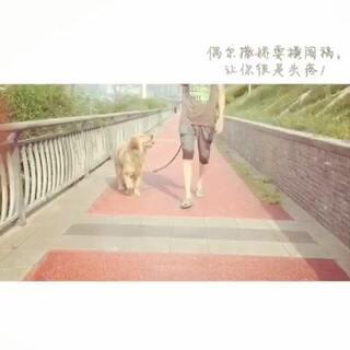 与二货仔相处的时光#小小美好#崽崽,今年一岁,单身狗😂#宠物##我要上热门#
