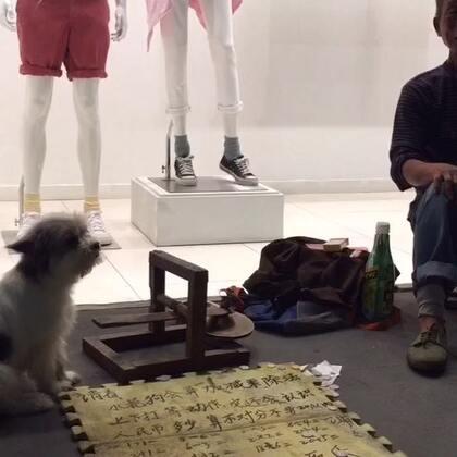 狗狗成精了2🙀🙀#随手拍##狗狗#