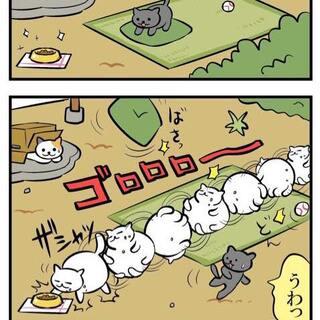 #猫咪后院#好可爱