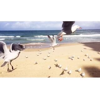 """#宠物慢动作大赛#悉尼的海鸟就是我的宠物。给小伙伴们看看无论海边、街上看着这些超级灵的🐦们抢食的各种萌态。感谢@美拍精彩合集 让我留住这#小小美好#。🙏🙏🙏感谢来到微信""""食色记""""给我投票的朋友们😘😘😘。"""