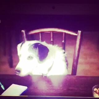 #宠物间的有爱瞬间#秒杀单身狗 真**秀!