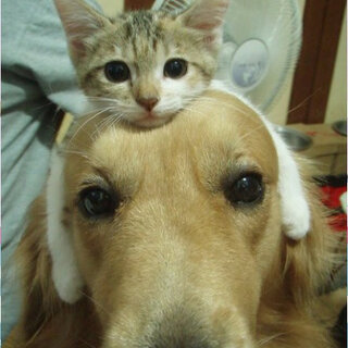 #宠物间的有爱瞬间#😁😁
