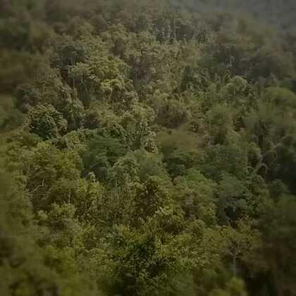 拉市海游览直升机,飞得不算高能看见森林里的大象群。