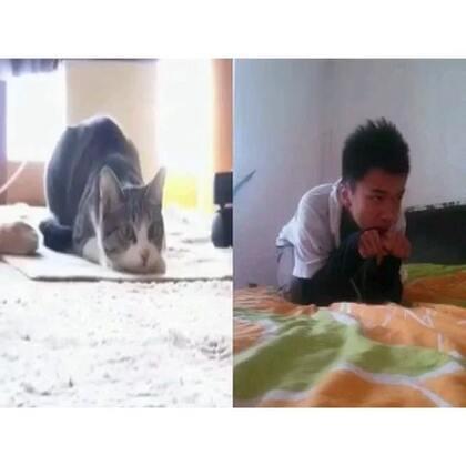 这猫节奏感太好…模仿模仿。