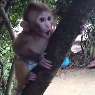 天霸叫得太疯狂了。他实在太粘我了。根本不想一个人玩#60秒美拍##可爱宠物##猴子#