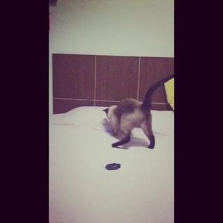 玩球系列三😋#宠物慢动作大赛#