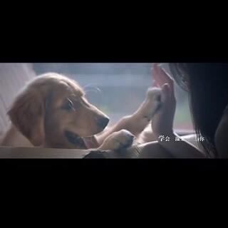 #60秒美拍##宠物##电影mv##只要一分钟##我的男友和狗#养🐶和爱🐶的大家到时候可以去看看这部电影哦😭😭😭❤❤❤@Angel爸爸_ @布哒哒歪总 @Darling成长记 @讨厌的麻麻歪歪的外婆 @丸子CC麻.芒果外婆~ @为了一毛钱_ @心语公主 @一只叫宝宝的贵妇犬🐩 @喜欢吃莲藕啊 @粑粑愛雪宝