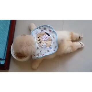 #在韩国超火的视频# 136 你要懒到神马程度啊!!!!!#汪星人##吃货##我要上热门#@美拍小助手