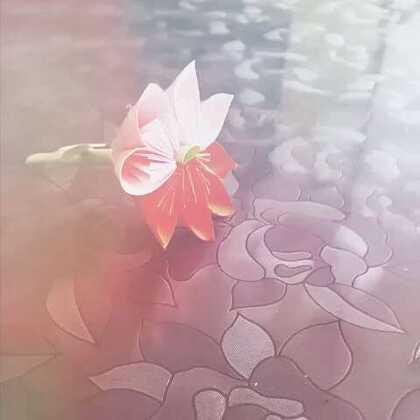 花丛中飞舞的蝴蝶的美拍