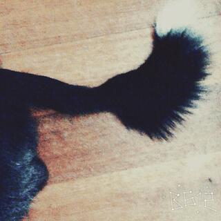 #晒出你的狗尾巴#