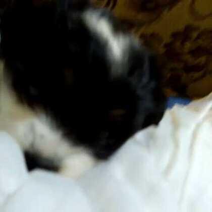 #小狗##随手美拍##微笑##可爱的小狗我们家的小狗#
