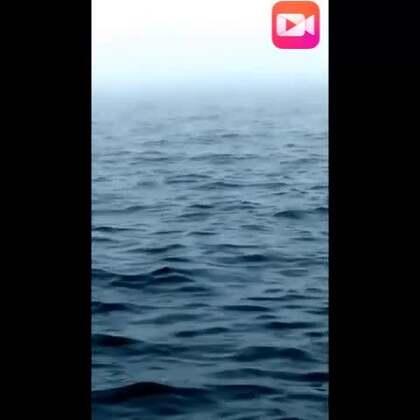 海里的神兽出来了!!!!!!!