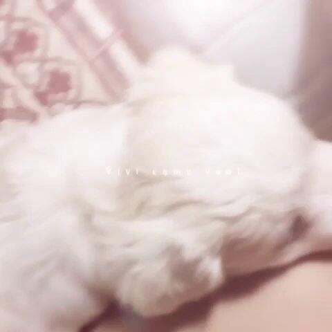 生猛的小白兔图片