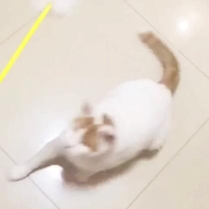 最后,新捡来的小流浪猫实在是看不下去了,自己上来做了个示范。