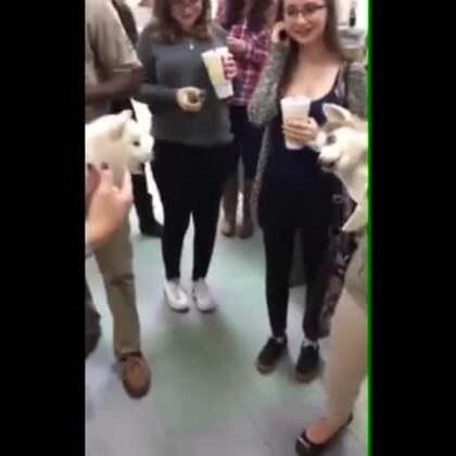 两只狗狗互相看不顺眼,疯狂的吵架~~~说过多少次了,能动手,尽量别吵吵!