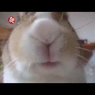 【能吃是福!】(๑´ㅂ`๑)一条有点魔性的视频,自己都不知道为啥笑了,也不知道为啥会幸福的盯着看完......[笑cry]