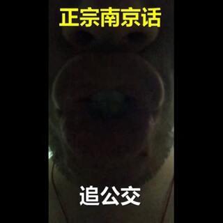 南京版追公交笑出翔!全国追公交大赏!#各地都来追公车#