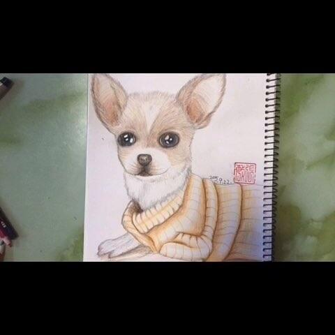 周二 手绘彩铅画 彩铅画 我爱画画 萌物 狗狗 兔兔的陶阁的美拍
