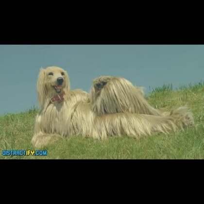 日本脑洞大开的广告合集 1#我是一条广告狗#