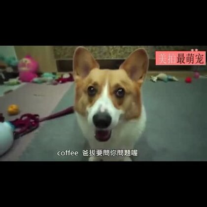 #宠物##搞笑#台湾有个网友把自家的柯基犬当测谎机用,结果知道了令人伤心的事实。。。柯基的表情很到位。。😂😂