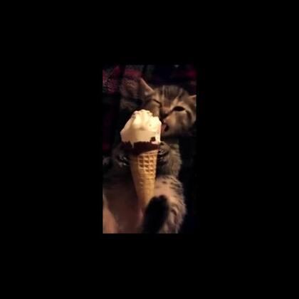 #宠物#馋嘴喵星人吃冰激凌合辑!😍😍😍