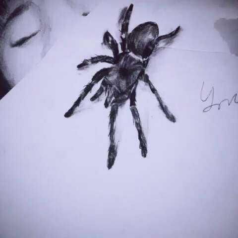 3d立体蜘蛛,画的有点草