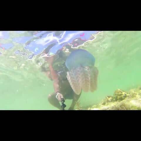 【十三Film影视工作室美拍】#跑酷环球旅行#菲律宾站的水下花...