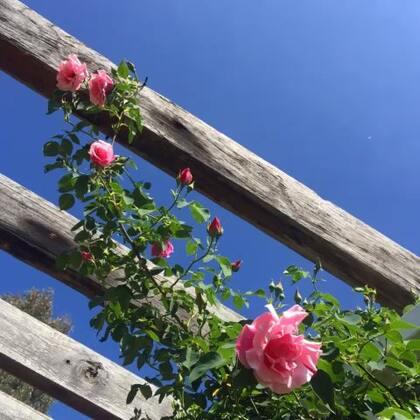 #旅行#鲜花盛开的季节