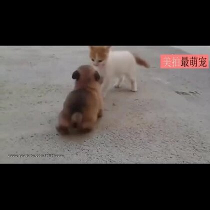 #宠物#一大早就被它俩萌的血槽全空,眼睛全程无法从小屁股上移开😍😍💘