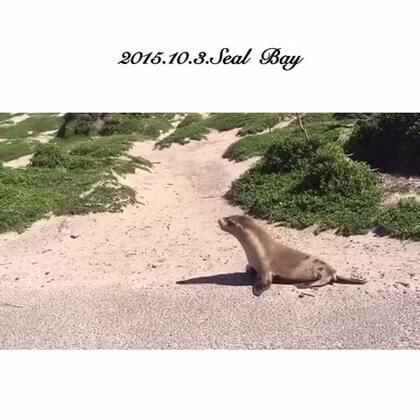 #旅行#Seal Bay澳大利亚海豹育婴处