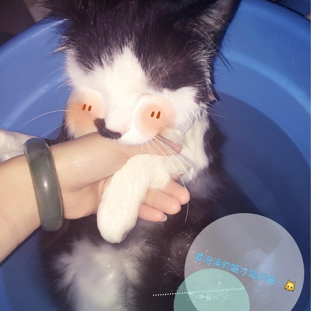 我爱洗澡皮肤好好,哦哦哦哦~#宠物##猫##给猫咪洗澡