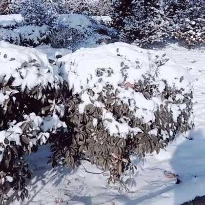 #最美的雪景#开车太危险,偶尔走走才发现自己已经错过了太多的美景