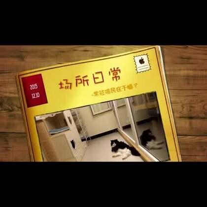 喵语正式和北京最好的流浪猫救助机构幸运土猫合作啦!未来会有更多联合出品的栏目~平时喵语也会协助幸运土猫制作更多有趣的小视频哦~请大家持续关注!#领养代替购买#