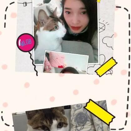 #家有萌宠#逗比的猫咪,拍照它总是很配合😄