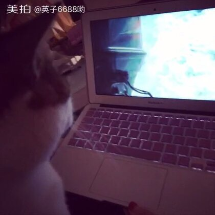 #周三#我家猫星人是电视迷😂看电视看得好认真啊😀,#我家有萌宠##我家有猫猫咪##家有喵星人##家有爱宠#