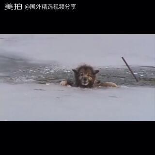 又一暖心人视频 狗狗被困冰面 破冰救狗狗 #暖心##正能量##热门#