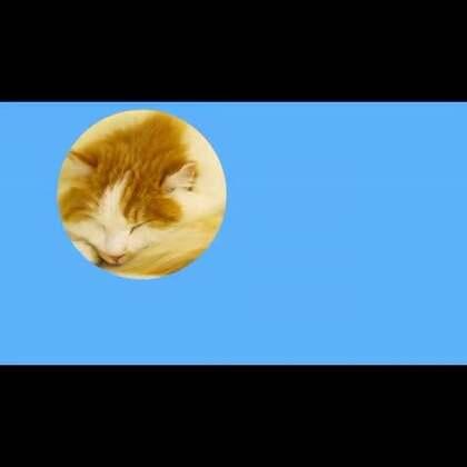 #宠物##公益#感谢大家对喵语的关注,受宠若惊。幸运土猫是北京最先开始倡导领养和科学喂养的公益组织,目前已经帮助上千只流浪猫找到了自己的幸福。由RendY工作室出品的《喵语》也拥有相同的理念,由于工作室和幸运土猫人力都非常有限,这个节目的更新将会是双周的,希望能帮大家更懂猫咪!