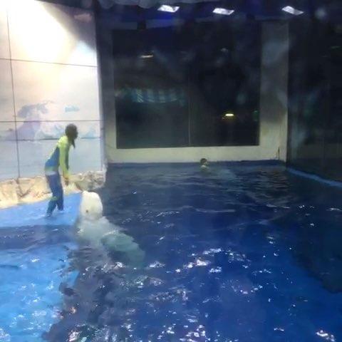 哈尔滨极地海洋馆