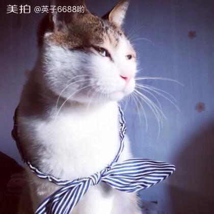 猫星人的表情瞬间万变😂#家有萌宝##家有猫星人##表情大赛#